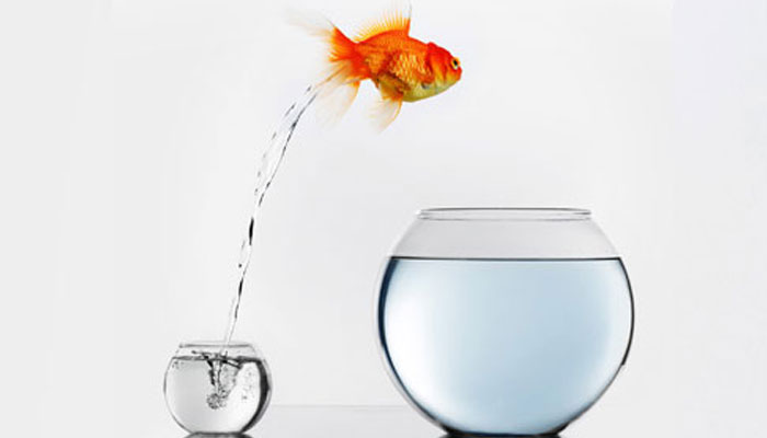 goldfish-jumping-bowl