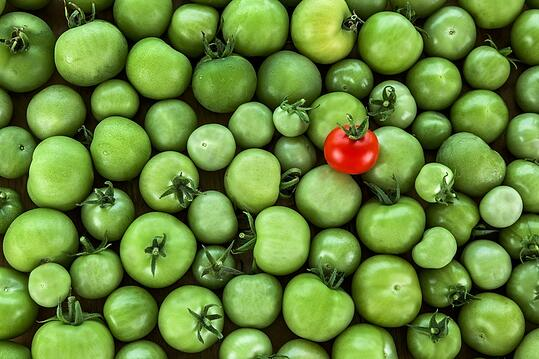 Tomatoes-Advertising-Concept.jpg