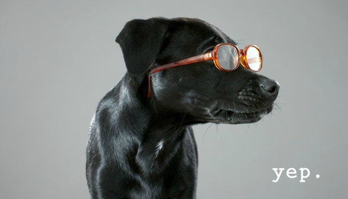 dog-black-lab-glasses-yep.jpg